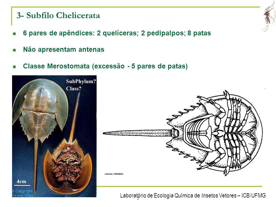 Laboratório de Ecologia Química de Insetos Vetores – ICB/UFMG 6 3- Subfilo Chelicerata Classe Arachnida - Cefalotórax e abdomen - Maioria predadora Ordem Scorpionida - Céfalotorax - Pré-abdomen - Pós-abdomen
