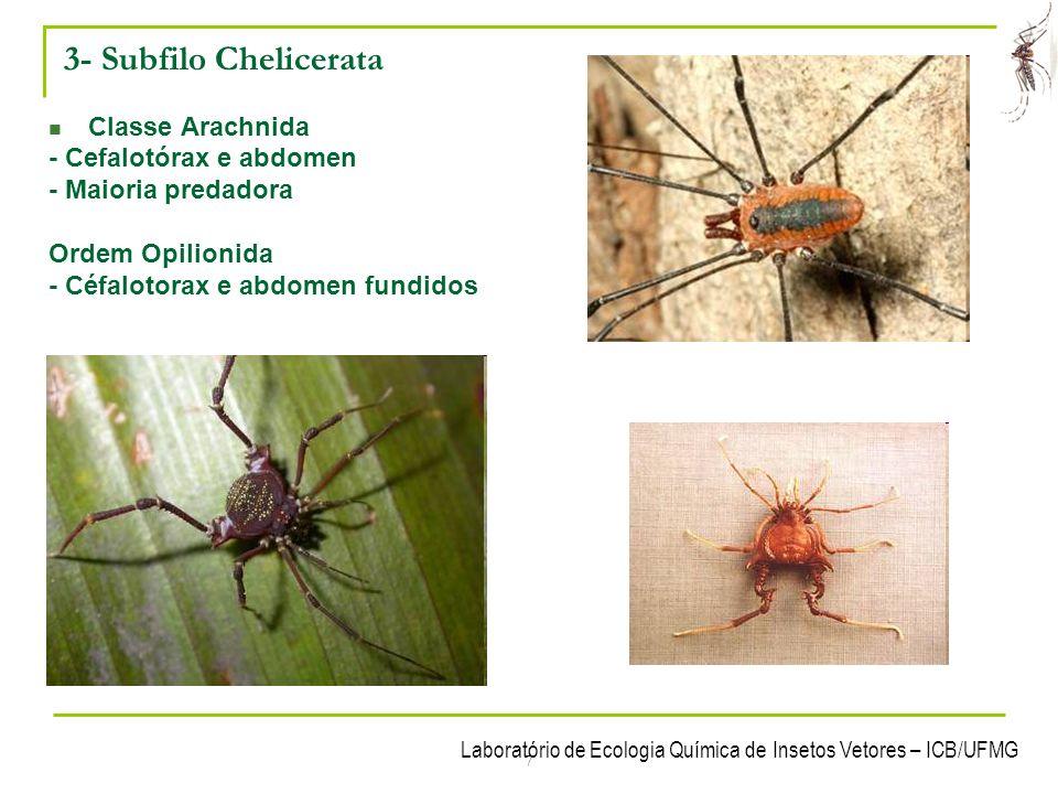 Laboratório de Ecologia Química de Insetos Vetores – ICB/UFMG 8 3- Subfilo Chelicerata Classe Arachnida - Cefalotórax e abdomen - Maioria predadora Ordem Uropigy - Escorpião vinagre
