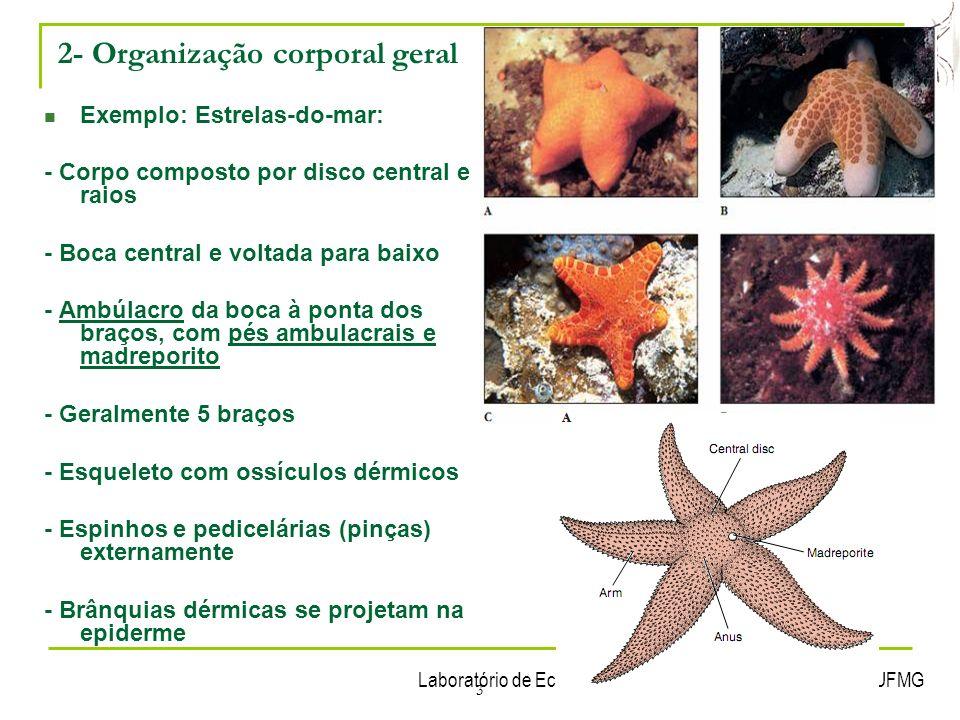 Laboratório de Ecologia Química de Insetos Vetores – ICB/UFMG 3 Exemplo: Estrelas-do-mar: - Corpo composto por disco central e raios - Boca central e