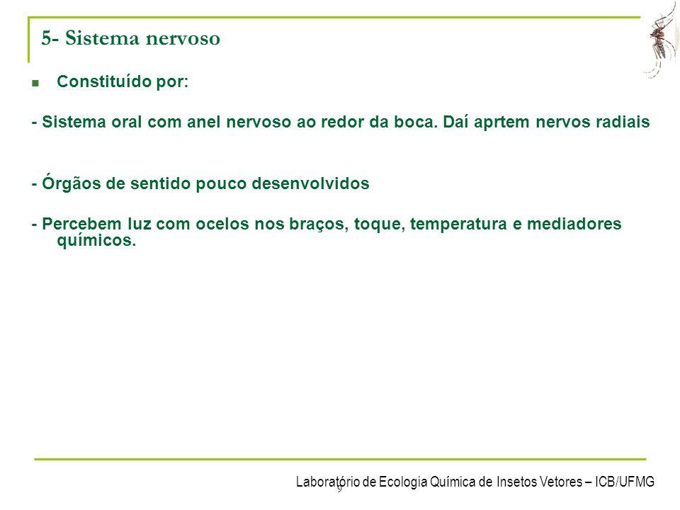 Laboratório de Ecologia Química de Insetos Vetores – ICB/UFMG 9 5- Sistema nervoso Constituído por: - Sistema oral com anel nervoso ao redor da boca.
