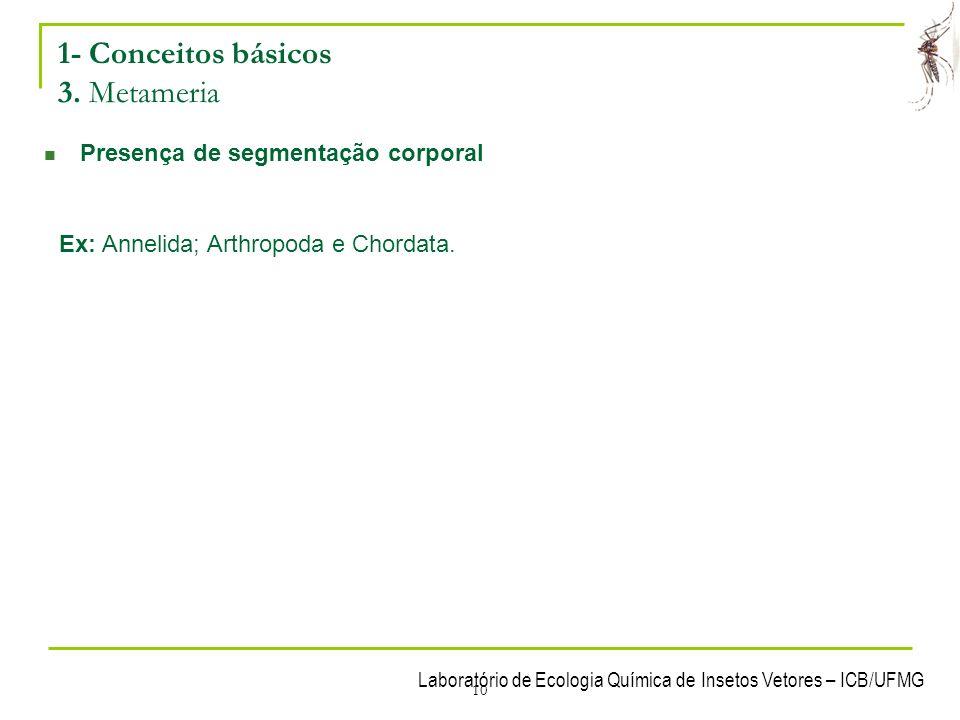 10 1- Conceitos básicos 3. Metameria Presença de segmentação corporal Ex: Annelida; Arthropoda e Chordata.
