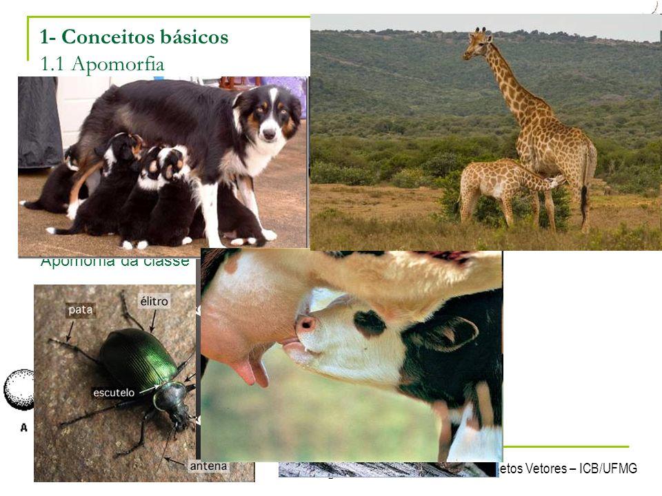 Laboratório de Ecologia Química de Insetos Vetores – ICB/UFMG 2 1- Conceitos básicos 1.1 Apomorfia Característica comum a todos os representantes de u