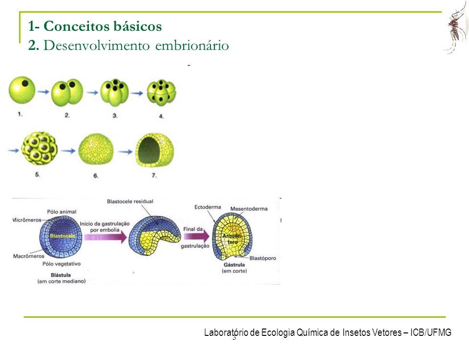 Laboratório de Ecologia Química de Insetos Vetores – ICB/UFMG 4 1- Conceitos básicos 2.1 Folhetos embrionários – Diblásticos e Triblásticos Tecidos embrionários presentes na gástrula Diblásticos = Possuem apenas 2 tecidos (Ectoderma e Endoderma).