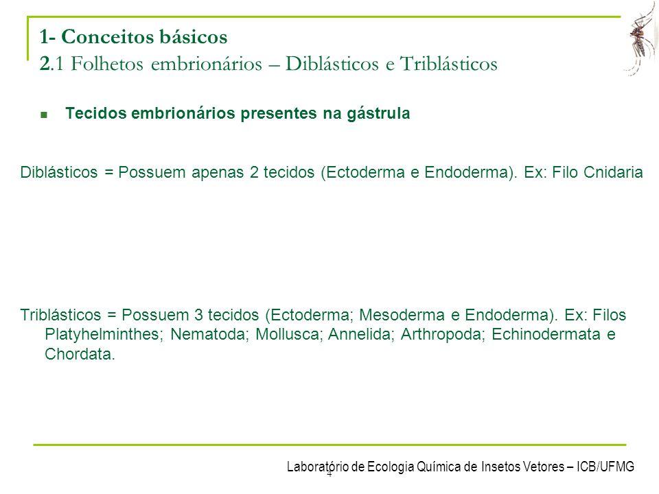 Laboratório de Ecologia Química de Insetos Vetores – ICB/UFMG 4 1- Conceitos básicos 2.1 Folhetos embrionários – Diblásticos e Triblásticos Tecidos em