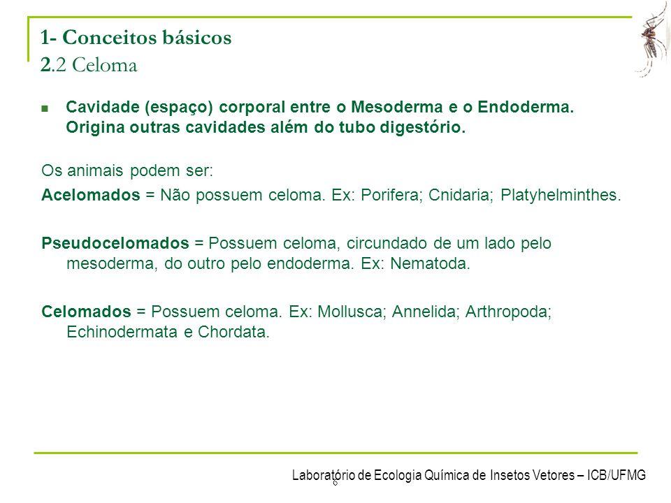 6 1- Conceitos básicos 2.2 Celoma Cavidade (espaço) corporal entre o Mesoderma e o Endoderma. Origina outras cavidades além do tubo digestório. Os ani