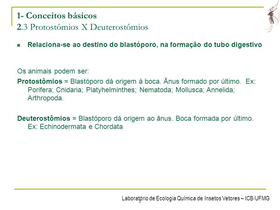 8 1- Conceitos básicos 2.3 Protostômios X Deuterostômios Relaciona-se ao destino do blastóporo, na formação do tubo digestivo Os animais podem ser: Pr