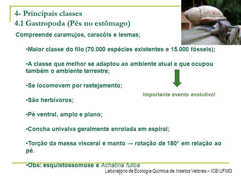 Laboratório de Ecologia Química de Insetos Vetores – ICB/UFMG 11 4- Principais classes 4.1 Gastropoda (Pés no estômago) Compreende caramujos, caracóis
