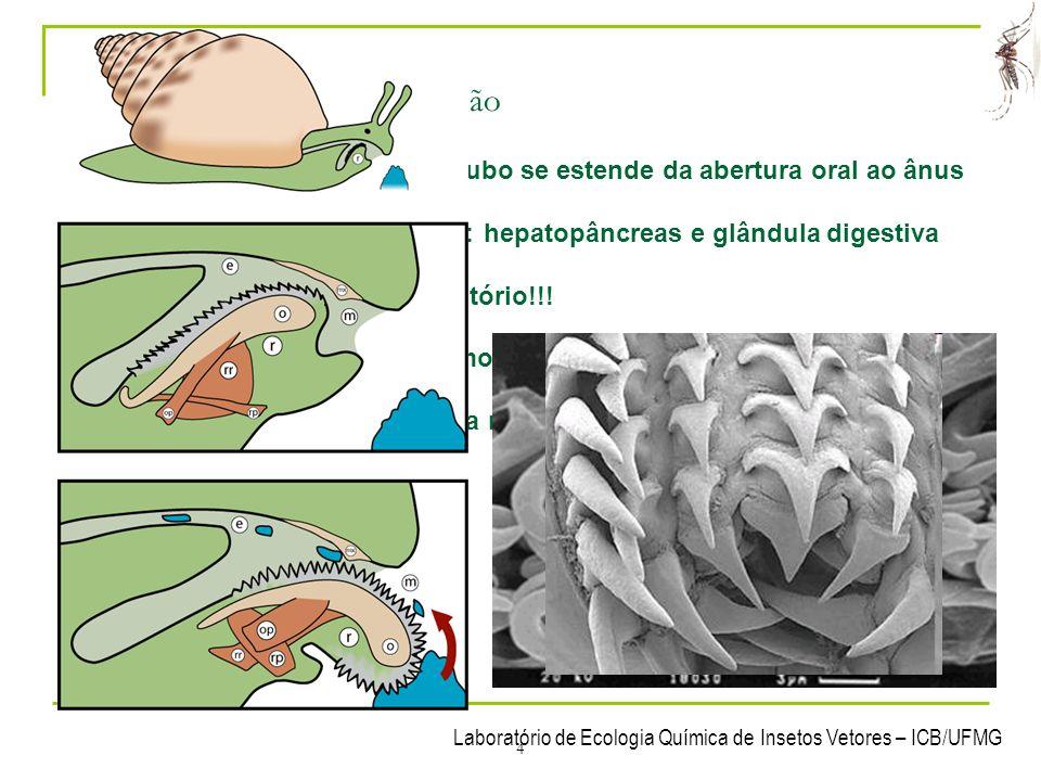 Laboratório de Ecologia Química de Insetos Vetores – ICB/UFMG 4 3- Sistemas dos Mollusca 3.1 Sistema digestório / nutrição Sistema digestório completo