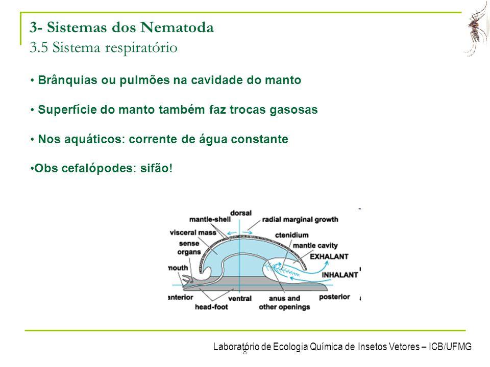 Laboratório de Ecologia Química de Insetos Vetores – ICB/UFMG 9 3- Sistemas dos Nematoda 3.6 Sistema reprodutor e reprodução Maioria dióica; Alguns são hermafroditas Figura 12.
