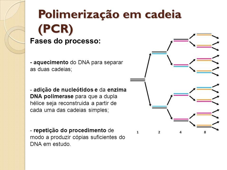 Polimerização em cadeia (PCR) Fases do processo: - aquecimento do DNA para separar as duas cadeias; - adição de nucleótidos e da enzima DNA polimerase para que a dupla hélice seja reconstruida a partir de cada uma das cadeias simples; - repetição do procedimento de modo a produzir cópias suficientes do DNA em estudo.
