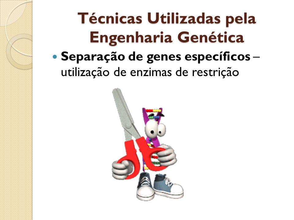 Técnicas Utilizadas pela Engenharia Genética Separação de genes específicos – utilização de enzimas de restrição