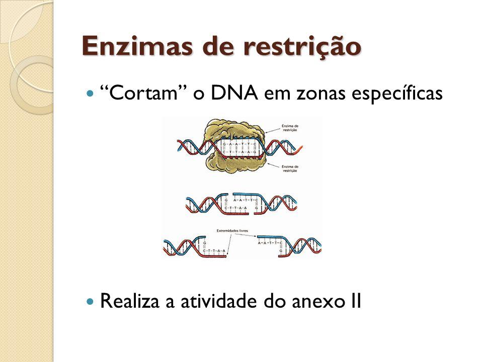 DNA recombinante Permite criar novas combinações de material genético, capaz de ser herdado, a partir de moléculas de DNA que podem ser de origem diferente.