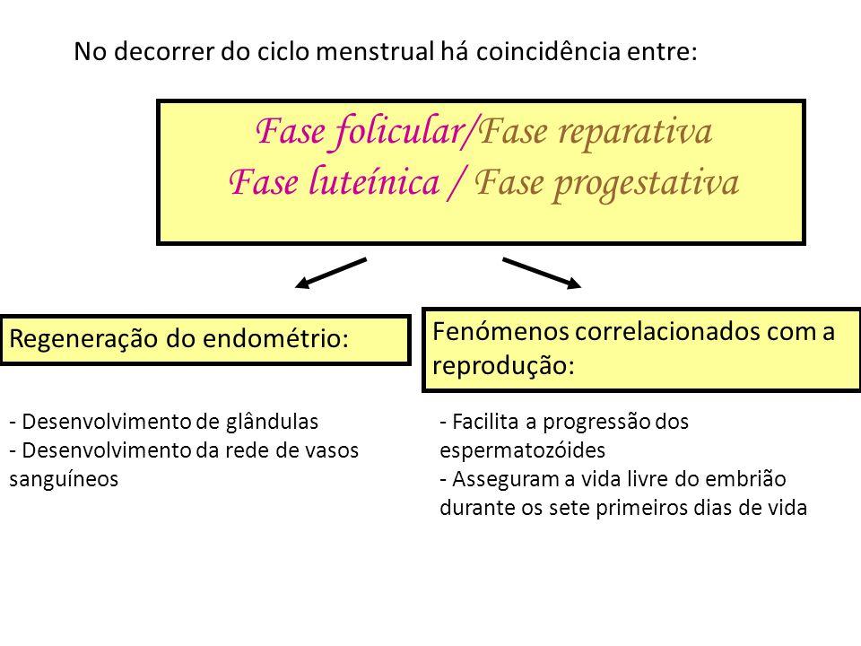 Fase folicular/Fase reparativa Fase luteínica / Fase progestativa No decorrer do ciclo menstrual há coincidência entre: Regeneração do endométrio: - D