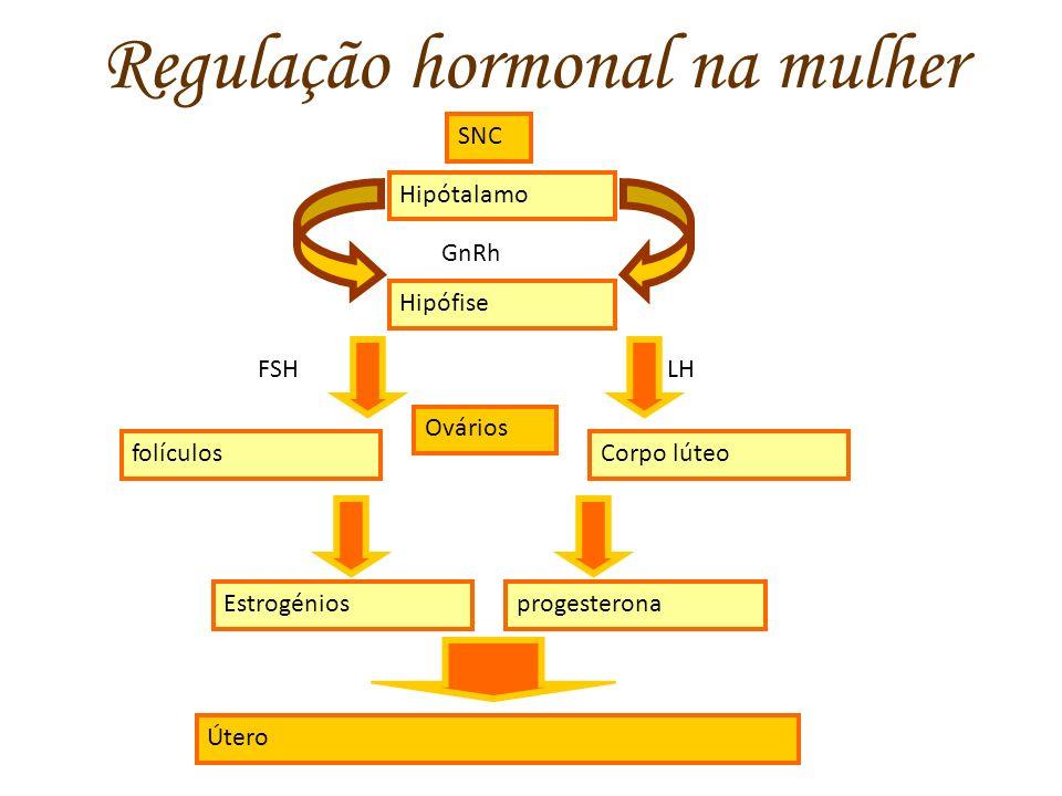 Regulação hormonal na mulher SNC Hipótalamo GnRh Hipófise Corpo lúteo FSHLH folículos progesterona Útero Estrogénios Ovários