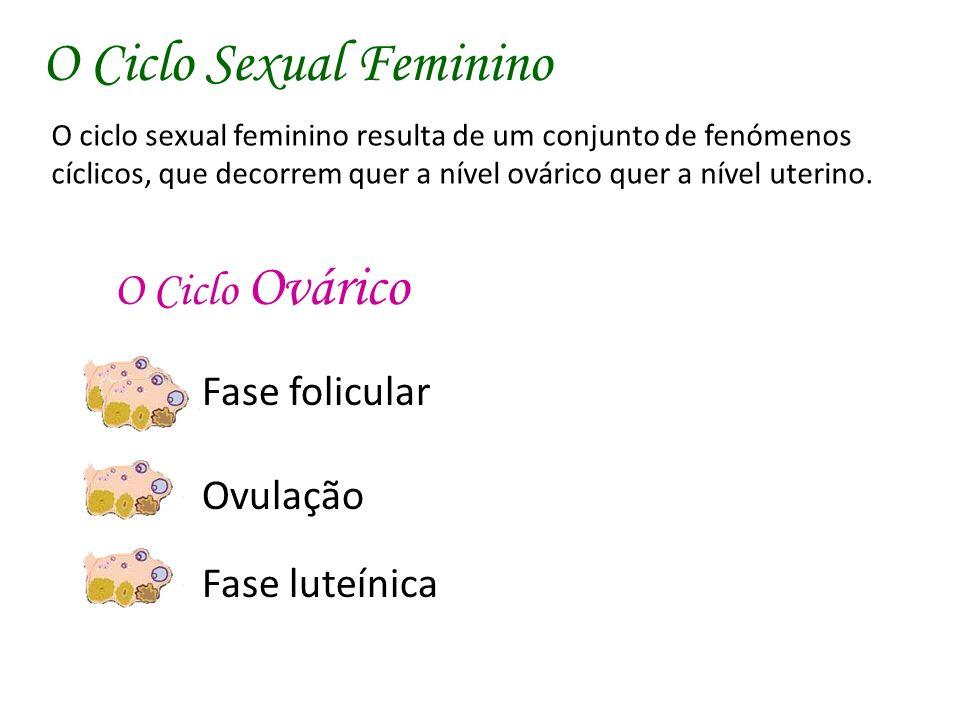 O Ciclo Ovárico Fase folicular Ovulação Fase luteínica O ciclo sexual feminino resulta de um conjunto de fenómenos cíclicos, que decorrem quer a nível