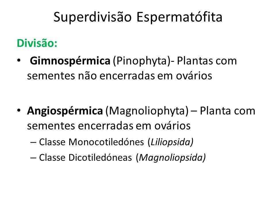 Superdivisão Espermatófita Divisão: Gimnospérmica (Pinophyta)- Plantas com sementes não encerradas em ovários Angiospérmica (Magnoliophyta) – Planta c