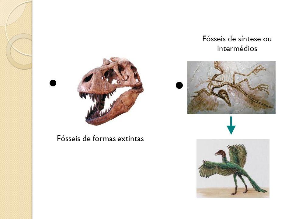 Fósseis de formas extintas Fósseis de síntese ou intermédios