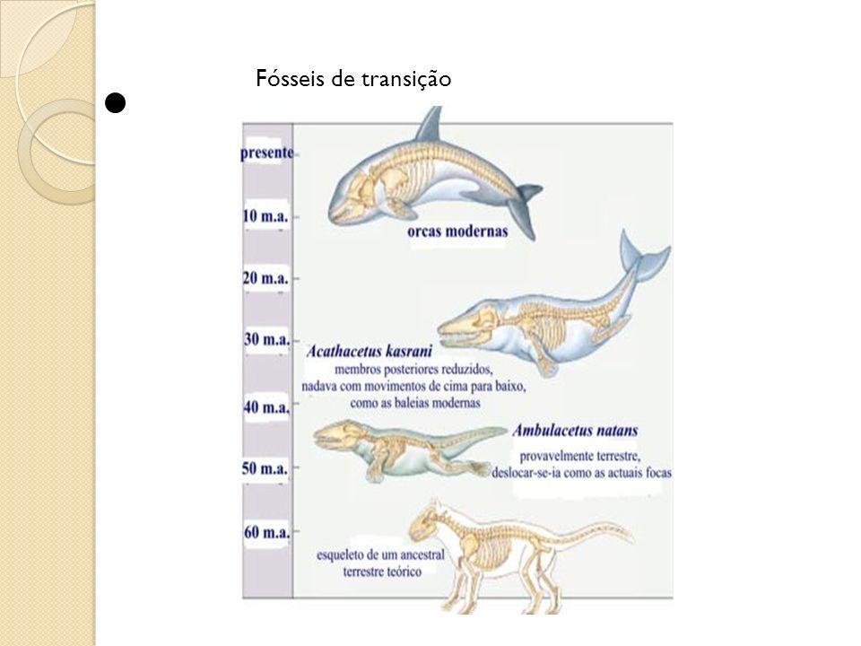 Fósseis de transição