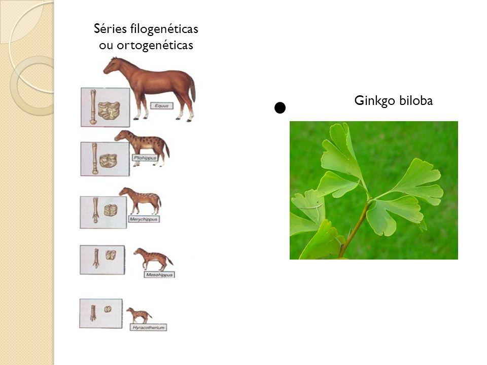 Ginkgo biloba Séries filogenéticas ou ortogenéticas