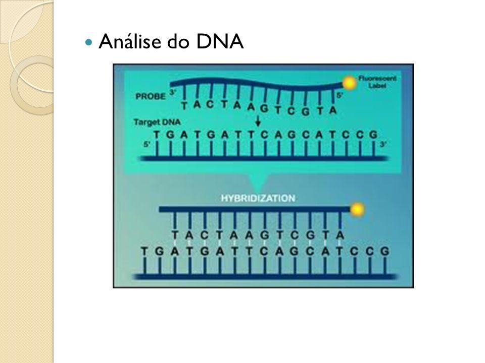 Análise do DNA