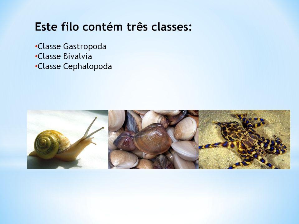 Este filo contém três classes: Classe Gastropoda Classe Bivalvia Classe Cephalopoda