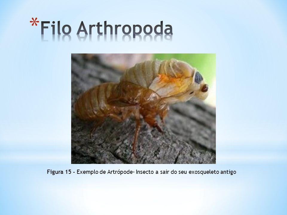 Figura 15 - Exemplo de Artrópode- Insecto a sair do seu exosqueleto antigo