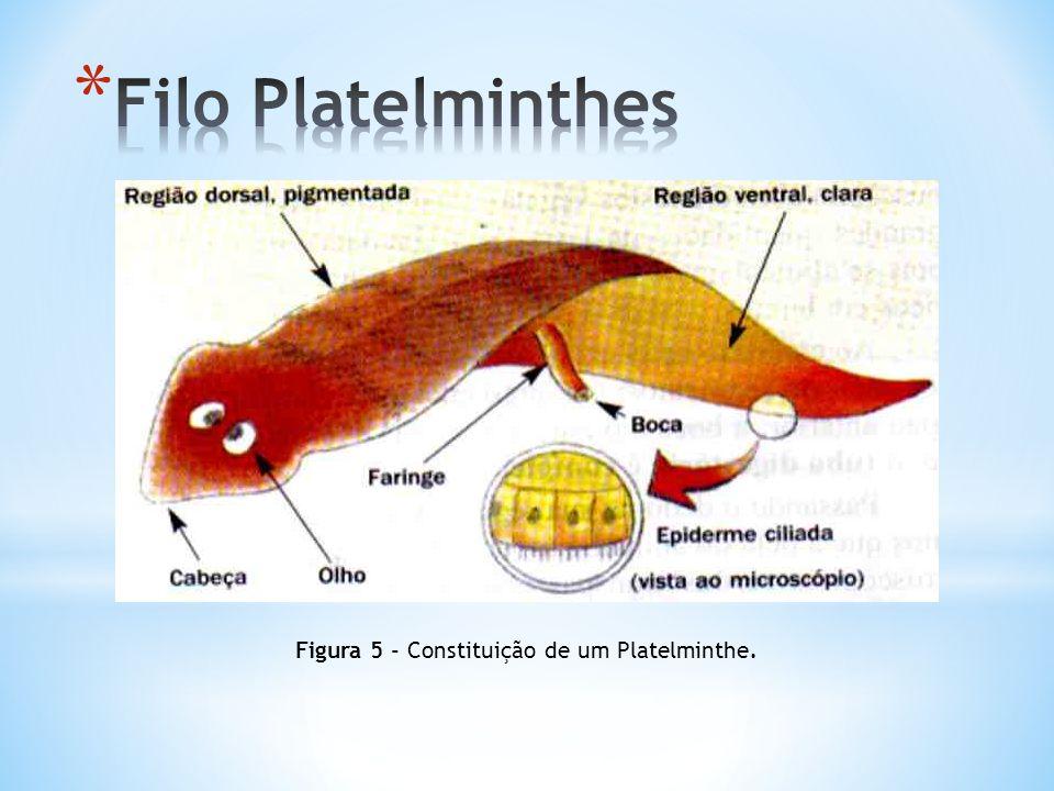 Figura 6- Sistema respiratório dos Platelminthes.