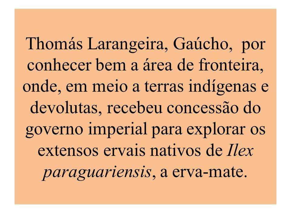 Thomás Larangeira, Gaúcho, por conhecer bem a área de fronteira, onde, em meio a terras indígenas e devolutas, recebeu concessão do governo imperial p