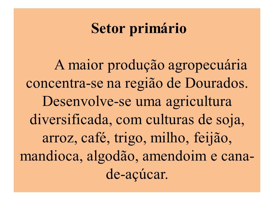 Setor primário A maior produção agropecuária concentra-se na região de Dourados. Desenvolve-se uma agricultura diversificada, com culturas de soja, ar