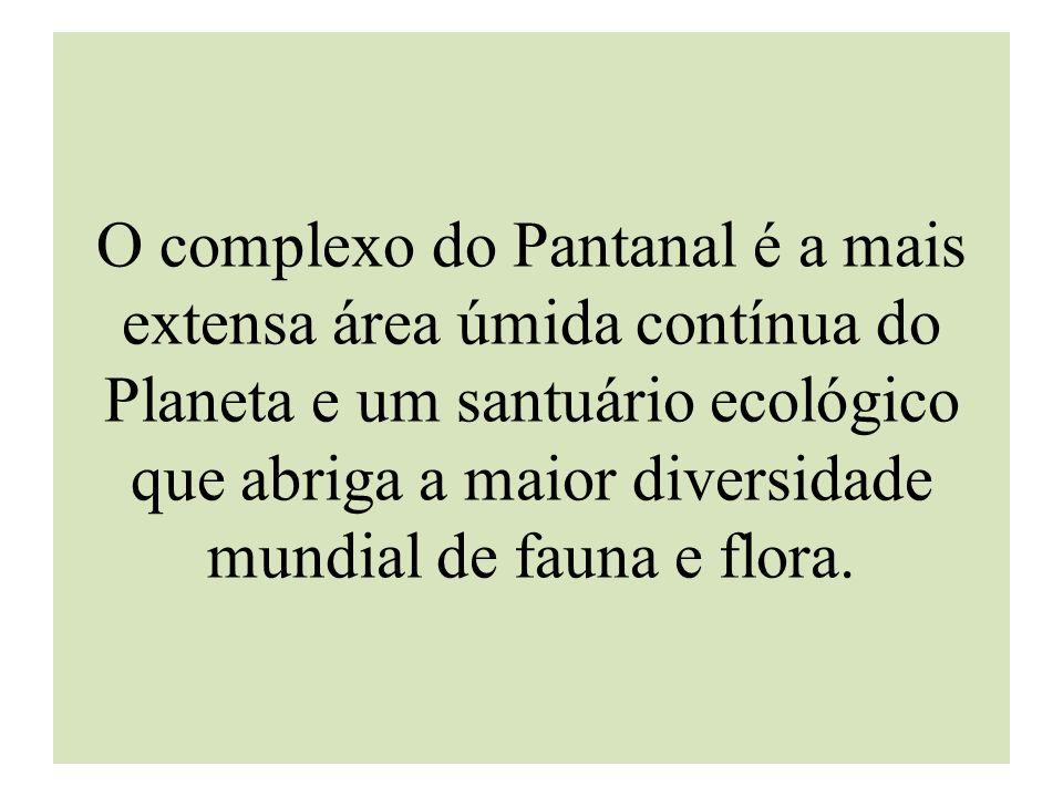 O complexo do Pantanal é a mais extensa área úmida contínua do Planeta e um santuário ecológico que abriga a maior diversidade mundial de fauna e flor