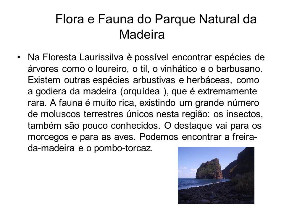 Flora e Fauna do Parque Natural da Madeira Na Floresta Laurissilva è possível encontrar espécies de árvores como o loureiro, o til, o vinhático e o ba