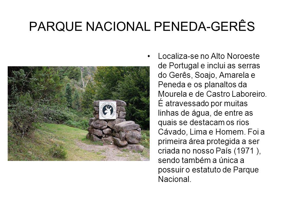 PARQUE NACIONAL PENEDA-GERÊS Localiza-se no Alto Noroeste de Portugal e inclui as serras do Gerês, Soajo, Amarela e Peneda e os planaltos da Mourela e
