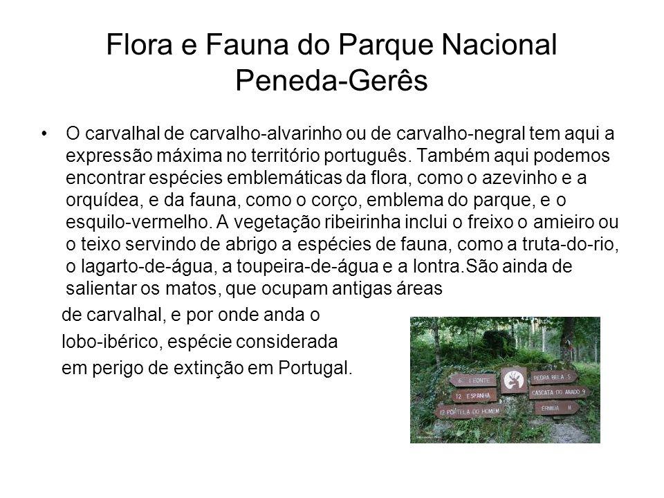 Flora e Fauna do Parque Nacional Peneda-Gerês O carvalhal de carvalho-alvarinho ou de carvalho-negral tem aqui a expressão máxima no território portug