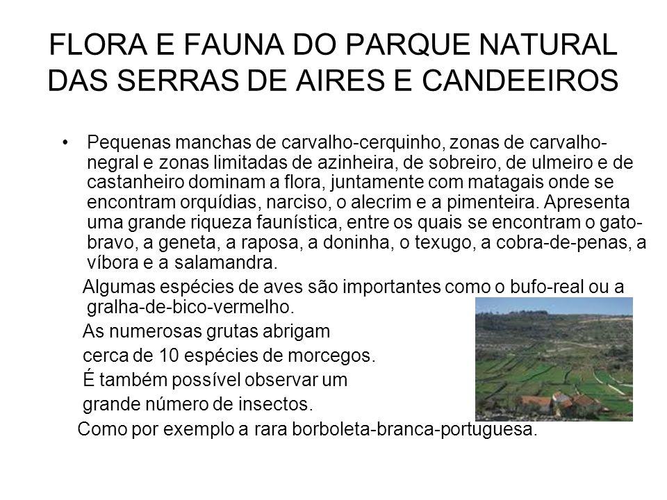 FLORA E FAUNA DO PARQUE NATURAL DAS SERRAS DE AIRES E CANDEEIROS Pequenas manchas de carvalho-cerquinho, zonas de carvalho- negral e zonas limitadas d