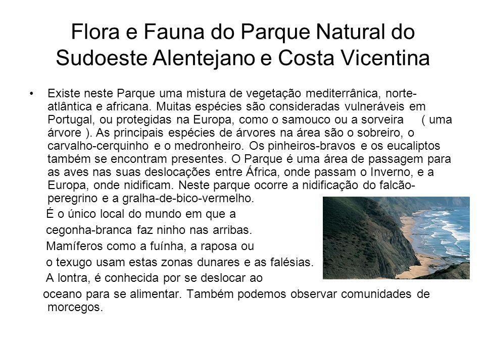Flora e Fauna do Parque Natural do Sudoeste Alentejano e Costa Vicentina Existe neste Parque uma mistura de vegetação mediterrânica, norte- atlântica