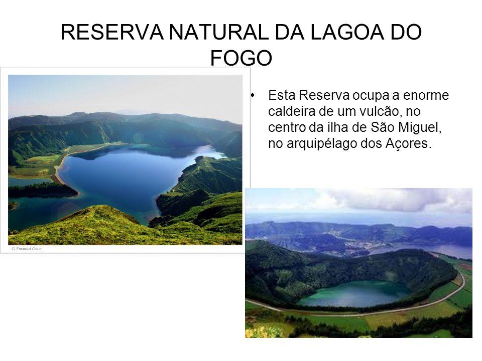 Flora e Fauna da Reserva Natural da Lagoa do Fogo Esta Reserva é rodeada por uma densa e exuberante vegetação endémica, onde se destacam algumas espécies como o cedro-do- mato, o louro, o sanguinho, o trovisco-macho, a malfurada e a urze.