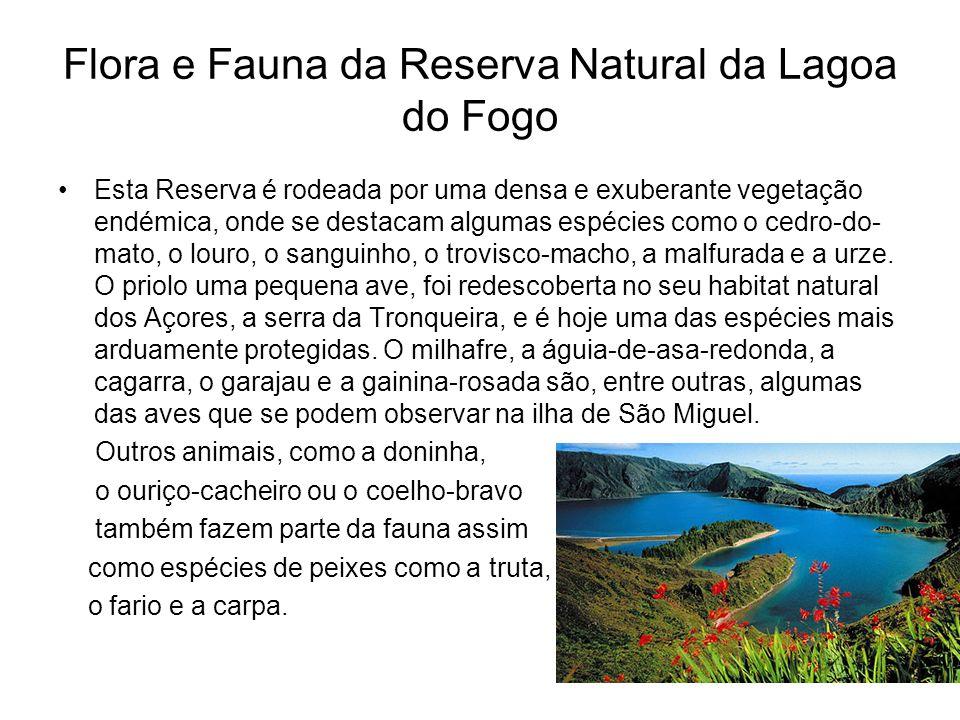 Flora e Fauna da Reserva Natural da Lagoa do Fogo Esta Reserva é rodeada por uma densa e exuberante vegetação endémica, onde se destacam algumas espéc