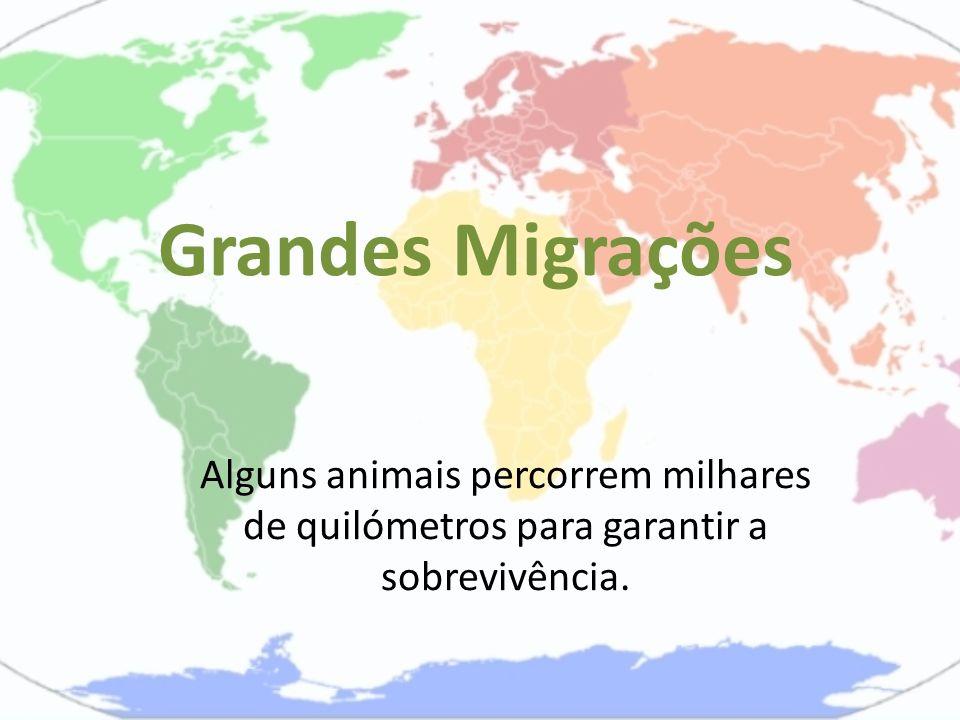 Grandes Migrações Alguns animais percorrem milhares de quilómetros para garantir a sobrevivência.