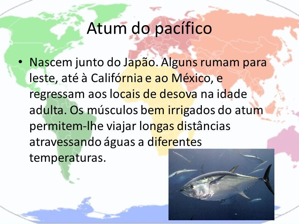 Atum do pacífico Nascem junto do Japão. Alguns rumam para leste, até à Califórnia e ao México, e regressam aos locais de desova na idade adulta. Os mú