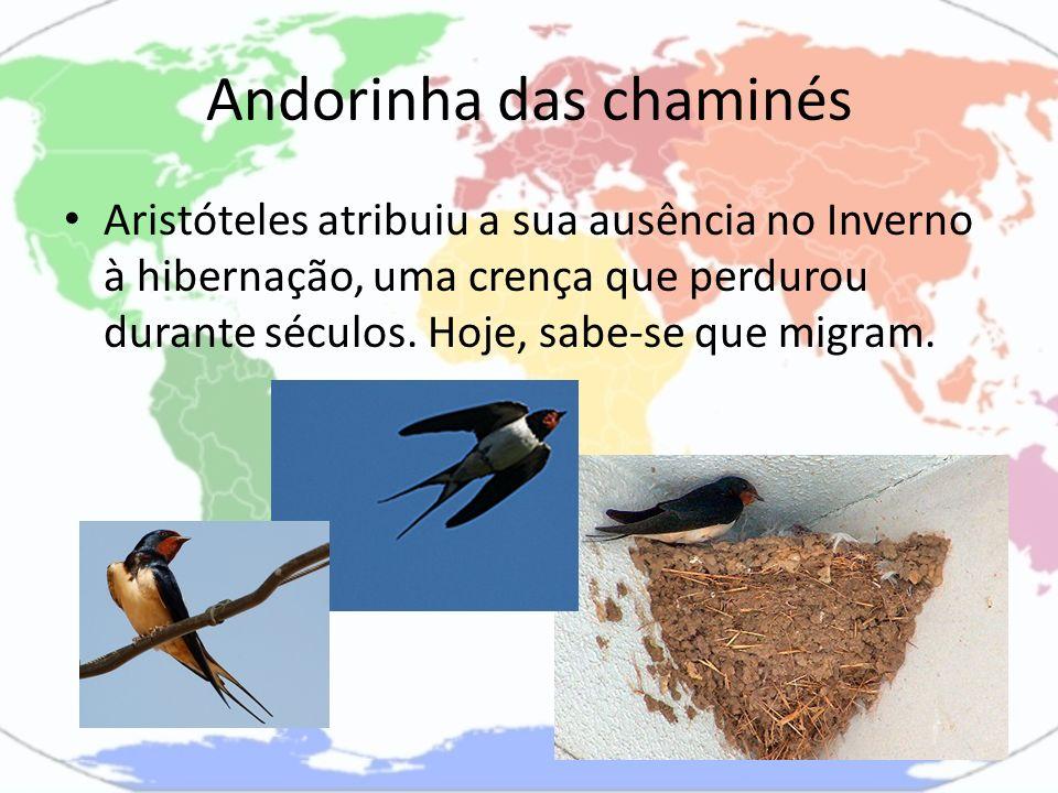 Andorinha das chaminés Aristóteles atribuiu a sua ausência no Inverno à hibernação, uma crença que perdurou durante séculos. Hoje, sabe-se que migram.