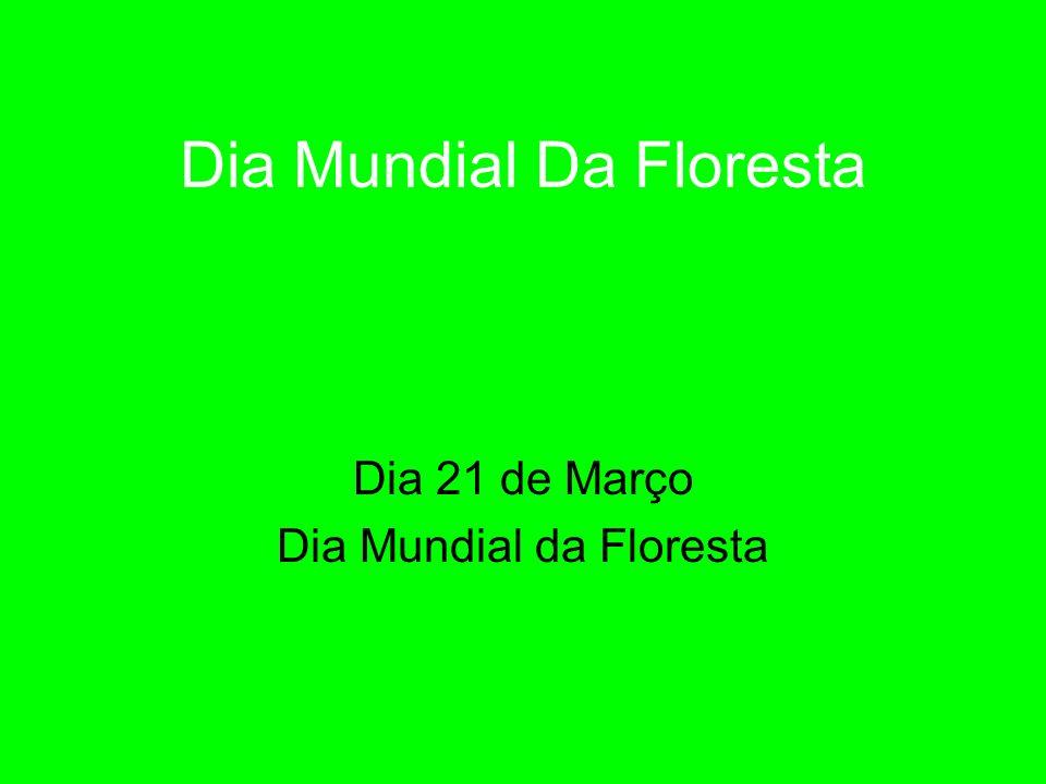 Dia Mundial Da Floresta Dia 21 de Março Dia Mundial da Floresta