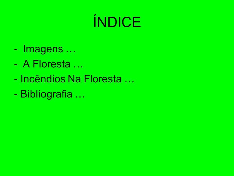 ÍNDICE -Imagens … -A Floresta … - Incêndios Na Floresta … - Bibliografia …