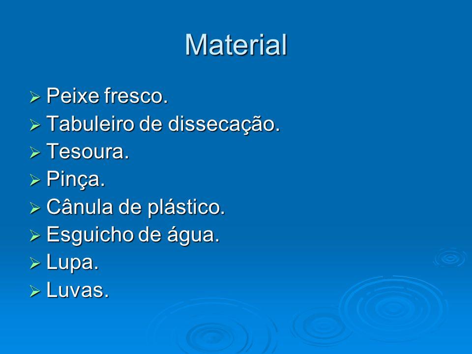Material Peixe fresco. Peixe fresco. Tabuleiro de dissecação. Tabuleiro de dissecação. Tesoura. Tesoura. Pinça. Pinça. Cânula de plástico. Cânula de p