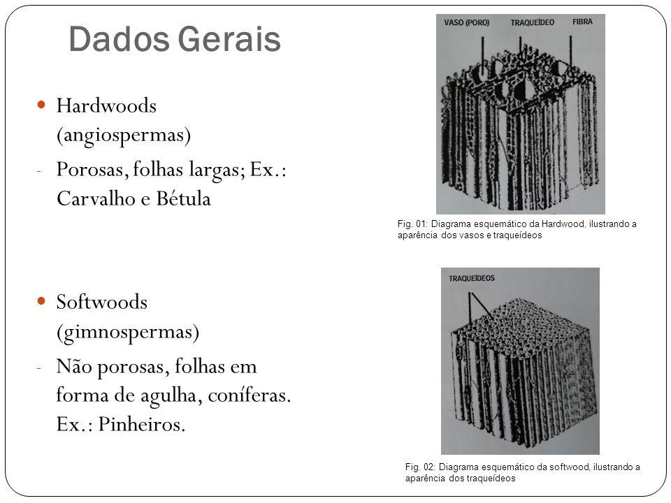 Níveis de retração da madeira CorteRetração RadialDe 3 a 6% TangencialDe 5 a 10% LongitudinalDe 0,5% Madeira Fresca CorteCarvalho Verde Carvalho submerso Radial4%12% Tangencial8%24% É possível controlar a retração das madeiras submersas.