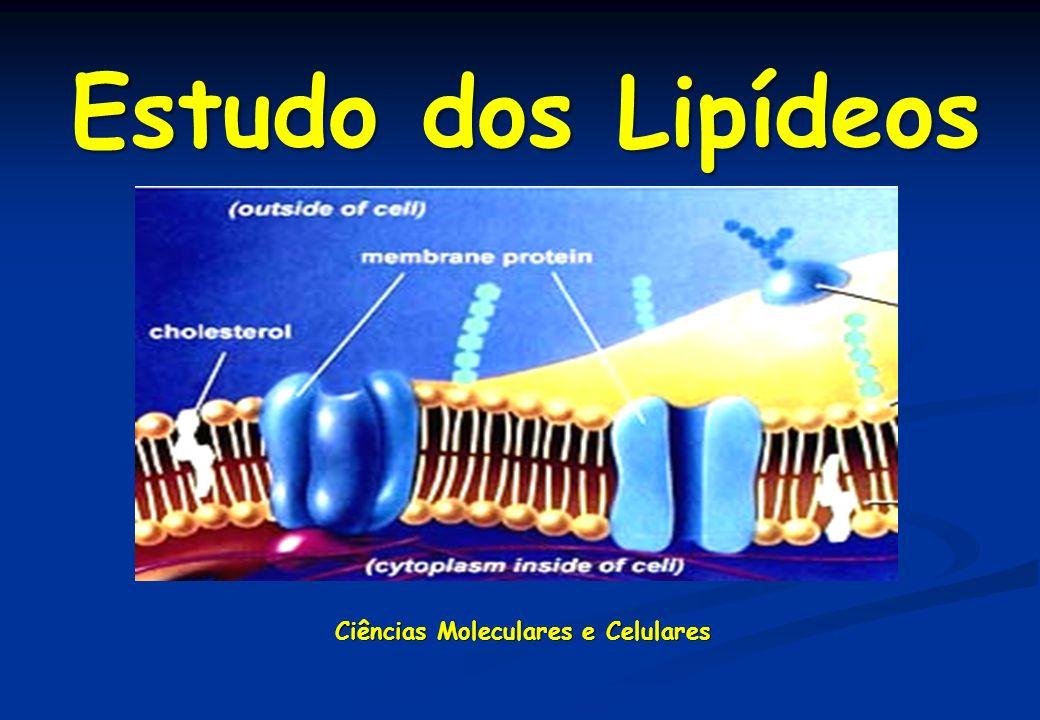 1 – Lipídeos de armazenamento ou simples - Triglicerídeos 2 – Lipídeos de membranas ou complexos - Fosfolipídeos - Esfingolipídeos – Esteróis 3 – Ceras Classificação de Lipídeos