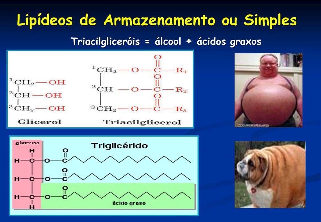 Lipídeos de Armazenamento ou Simples Triacilgliceróis = álcool + ácidos graxos