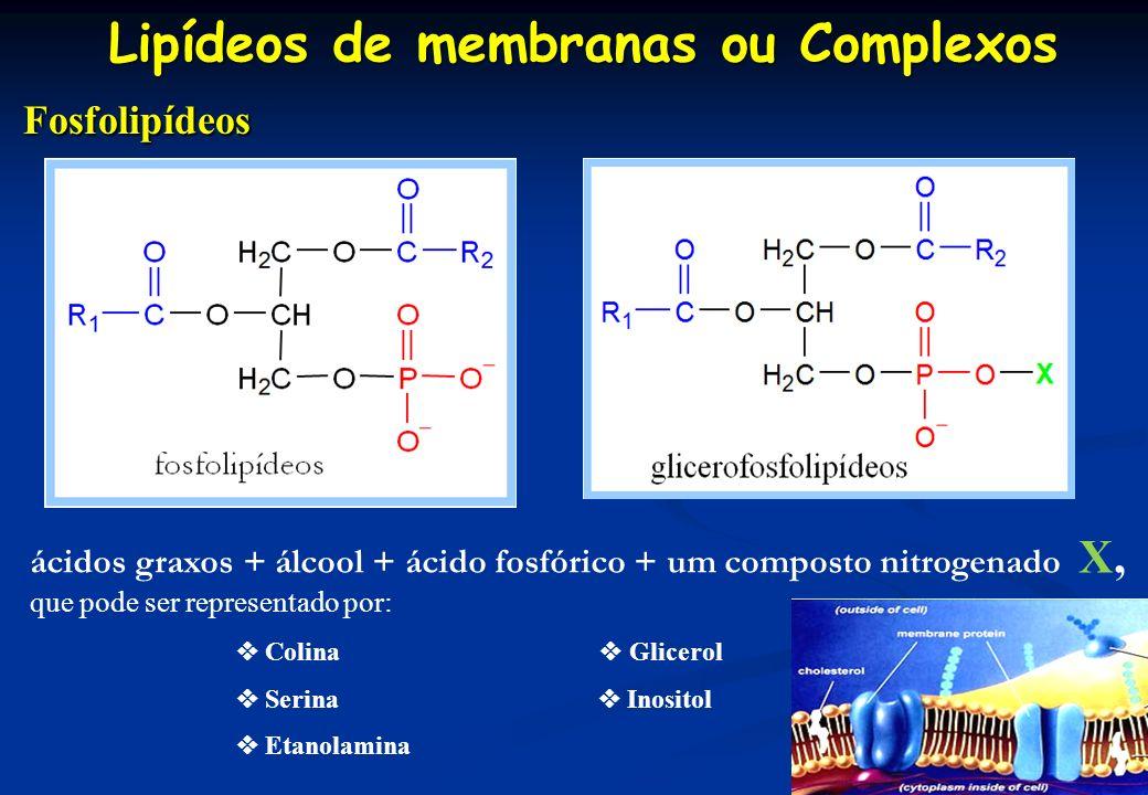 Lipídeos de membranas ou Complexos Fosfolipídeos Fosfolipídeos ácidos graxos + álcool + ácido fosfórico + um composto nitrogenado X, que pode ser repr