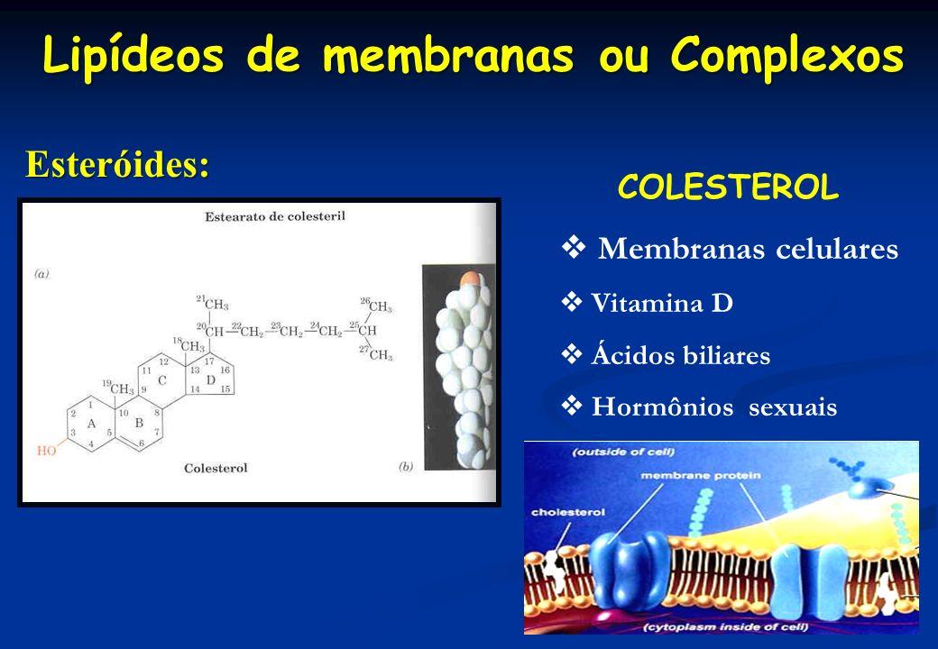 Lipídeos de membranas ou Complexos Esteróides: COLESTEROL Membranas celulares Vitamina D Ácidos biliares Hormônios sexuais