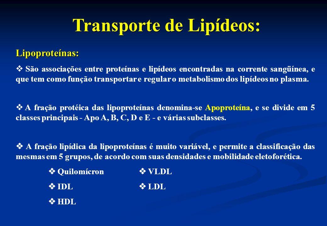 Transporte de Lipídeos: Lipoproteínas: São associações entre proteínas e lipídeos encontradas na corrente sangüínea, e que tem como função transportar