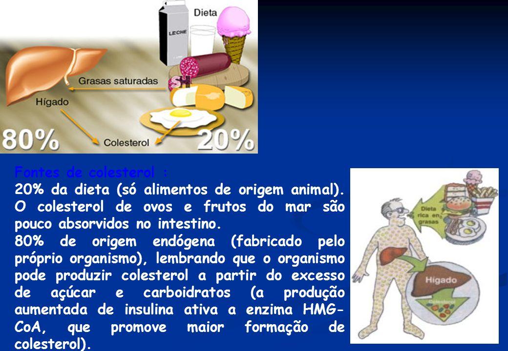 Fontes de colesterol : 20% da dieta (só alimentos de origem animal). O colesterol de ovos e frutos do mar são pouco absorvidos no intestino. 80% de or